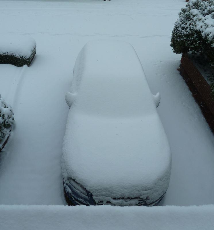 SQUIFFY 2 snow 24121.JPG