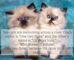 cats-934x.jpg