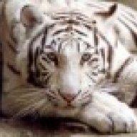 tiger727272